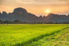 Sonnenuntergang am Reisfeld Lizenzfreies Stockfoto