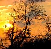 Sonnenuntergang in Südafrika Stockbilder