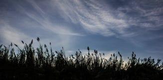 Sonnenuntergang-Schatten Stockfotografie