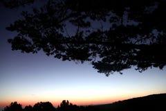 Sonnenuntergang-Schattenbild-Baum Stockfotos
