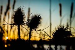 Sonnenuntergang am Seeufer stockfotos