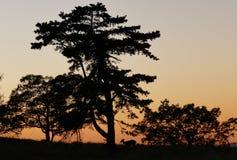 Sonnenuntergang in Shenandoah mit silhouet von Rotwild lizenzfreies stockbild