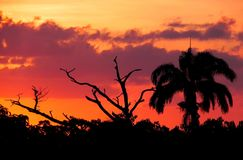 Sonnenuntergang Silhouetters Stockfotografie