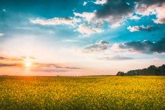 Sonnenuntergang-Sonnenaufgang-Himmel über Frühling blühendem Canola, Vergewaltigung, Rapssamen, Stockfoto
