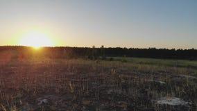 Sonnenuntergang sonnig über dem Wald stock video footage