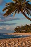 Sonnenuntergang-Strand-Palme Stockfotos
