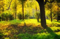 Sonnenuntergang-Szene im Wald Lizenzfreie Stockfotos