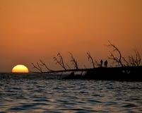 Sonnenuntergang-Tribut Lizenzfreie Stockbilder
