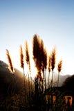 Sonnenuntergang u. Berg Lizenzfreie Stockfotos
