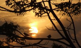Sonnenuntergang-u. birPalm Baum Bahrain Stockbild