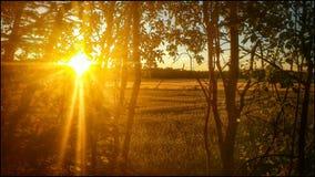 Sonnenuntergang u. Wald Stockbilder
