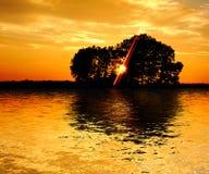 Sonnenuntergang und Bäume Lizenzfreies Stockfoto