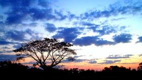 Sonnenuntergang und Baum 03 Stockbild