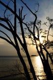 Sonnenuntergang und Baum Stockbilder
