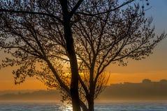 Sonnenuntergang und Baum mit Marmara-Meer Lizenzfreies Stockbild