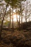Sonnenuntergang und Baum, Schattenbildbaum Stockbild