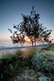 Sonnenuntergang und Baumschattenbild Stockfotografie