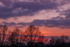 Sonnenuntergang und Baumschattenbild Stockfoto