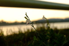 Sonnenuntergang und Blume Lizenzfreie Stockbilder