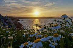Sonnenuntergang und Blumen, en Castell, Menorca Arenal D ' stockfotografie