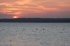 Sonnenuntergang und Ente Stockbild