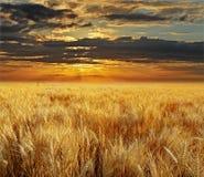 Sonnenuntergang und Feld Lizenzfreies Stockfoto