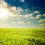 Sonnenuntergang- und Grünfeld Lizenzfreie Stockbilder