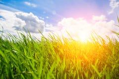 Sonnenuntergang und Gras stockfotografie