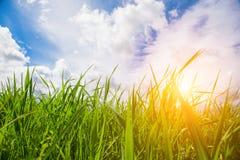Sonnenuntergang und Gras lizenzfreies stockfoto