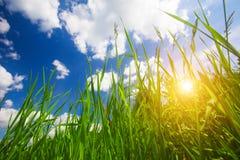 Sonnenuntergang und Gras Lizenzfreie Stockbilder