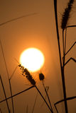 Sonnenuntergang und Gras Stockbild