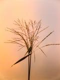 Sonnenuntergang und Gras Lizenzfreies Stockbild