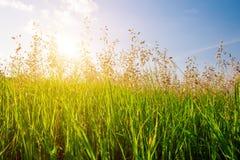 Sonnenuntergang und Gras lizenzfreie stockfotografie