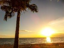 Sonnenuntergang und Kokosnuss Lizenzfreie Stockfotografie