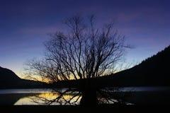 Sonnenuntergang-und Krankenpflege-Baum Lizenzfreie Stockbilder