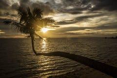 Sonnenuntergang- und Palme lizenzfreie stockfotografie