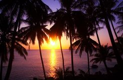 Sonnenuntergang und Palmen Stockbilder