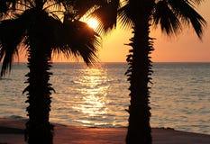 Sonnenuntergang- und Palmen auf dem Strand stockbilder