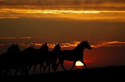Sonnenuntergang und Pferde (Schattenbild) Lizenzfreies Stockfoto