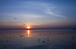 Sonnenuntergang und Seemöwen. Lizenzfreies Stockbild
