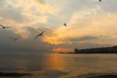 Sonnenuntergang und Seemöwen Stockbilder