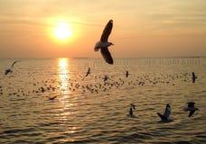 Sonnenuntergang und Seemöwenfliegen Stockfotos