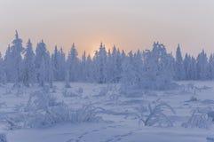 Sonnenuntergang und Sonnenaufgänge Russland, UralJanuary, Temperatur -33C Orange Himmel und Schattenbilder von Bäumen auf dem Hin lizenzfreies stockbild