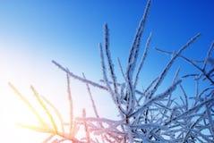 Sonnenuntergang- und Winterbaum Lizenzfreie Stockfotografie
