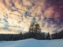 Sonnenuntergang- und Winterwald Stockfotos