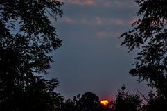 Sonnenuntergang vom Wald Stockbilder