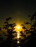 Sonnenuntergang von hinten einen Busch Lizenzfreies Stockfoto