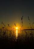 Sonnenuntergang von hinten Gras Lizenzfreie Stockfotos