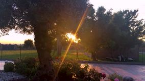 Sonnenuntergang vor einem Olivenbaum mit Sonne strahlt aus, die Niederlassungen filternd stock footage