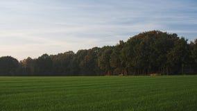 Sonnenuntergang während einer Oktober-Wanderung nahe Ootmarsum (die Niederlande) Stockbild